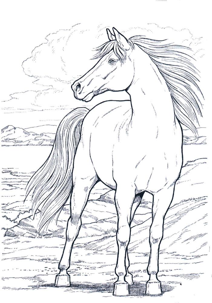 Resultado de imagem para animais para colorir